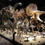 恐竜の町、御船町―御船町恐竜博物館―